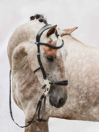 PS of sweden Hackamore Sport bridle